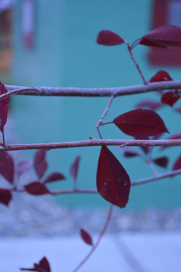 Autumn leaves in plums and blues